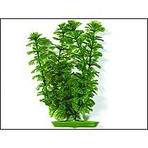 Rostlina Ambulia 38cm
