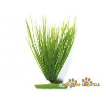 Rostlina Hairgrass 20 cm