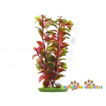 Rostlina Red Ludwigia 20 cm