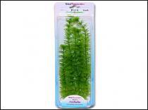 Rostlina Ambulia Plus 30 cm
