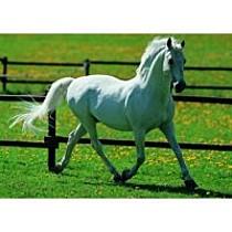 EDUCA Puzzle kůň, 500 dílků