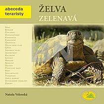 Nataša Velenská: Želva zelenavá