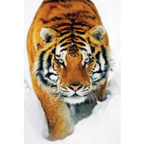 POSTERS TIGER IN THE SNOW tygr ve sněhu plakát 61 x 91 cm