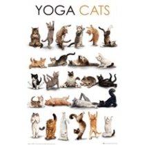POSTERS YOGA CATS plakát 61 x 91 cm