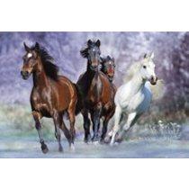 POSTERS RUNNING HORSES bob langrish plakát 61 x 91 cm