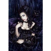 POSTERS VICTORIA FRANCES black cat plakát 61 x 91 cm