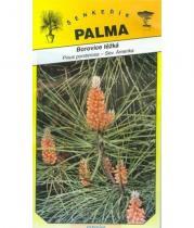 Pinus ponderosa 10 semen