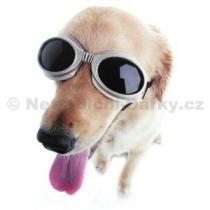Brýle pro psy