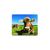 Allsop, krávy na louce