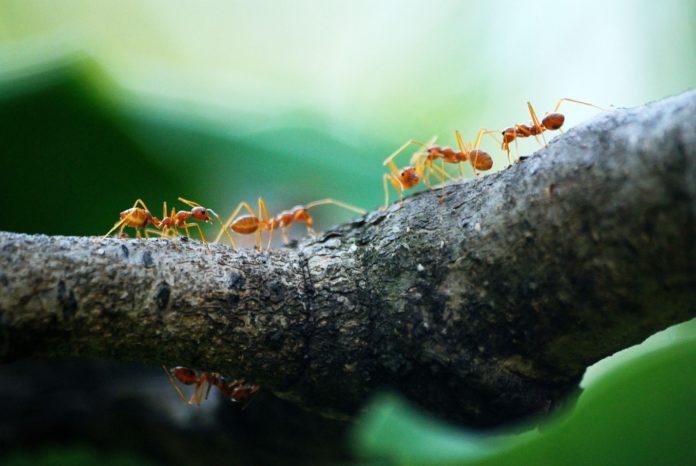Zbavte se hmyzu v bytě rychle a účinně